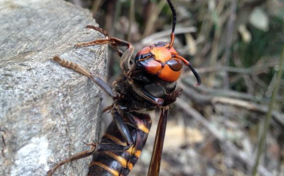 ハチの特徴
