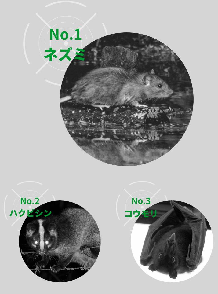 No.1ネズミNo.2ハクビシンNo.3コウモリ