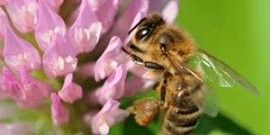 堺市でハチを駆除