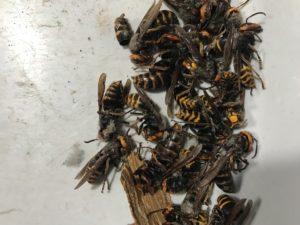 スズメバチの駆除は専門業者に依頼がおすすめ!危険性と正しい対処法