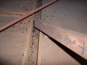 生駒郡斑鳩町 | イタチ・ネズミ駆除
