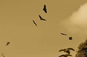 夏はコウモリが活発化!意外と知られていない「糞害」の恐ろしさとは