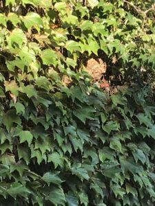 京都市北区 | スズメバチ駆除
