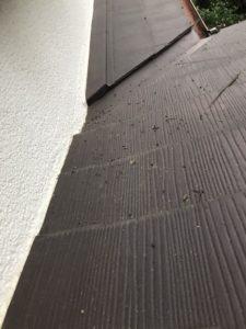 川崎市 | コウモリ駆除