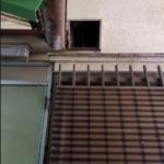 三郷市 ネズミ
