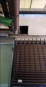 三郷市|ネズミ