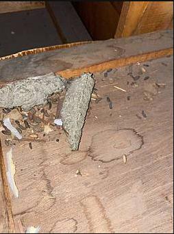 春日井 ネズミ被害