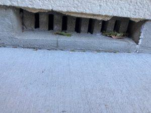 西川市|ネズミ駆除