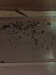 志摩市|ネズミ駆除