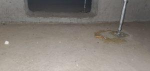 松戸市|ネズミ駆除
