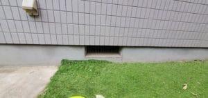 狛江市|ネズミ駆除
