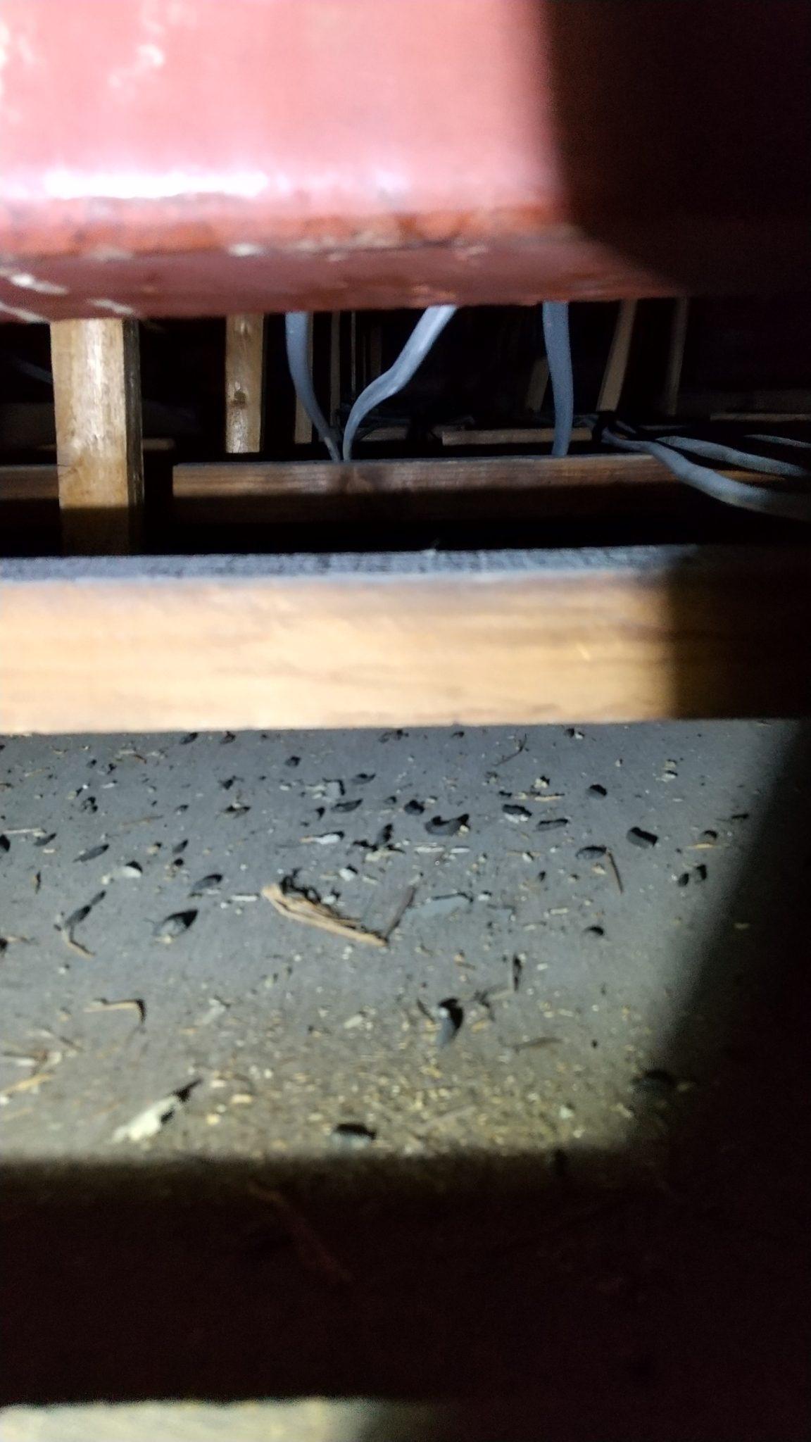 豊中市ネズミ駆除