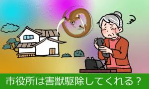 日本の市役所は害獣を駆除してくれない。自分で探すならどうする?