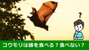 コウモリは蜂を食べる食べない?