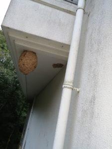 箕面市|ハチの巣駆除